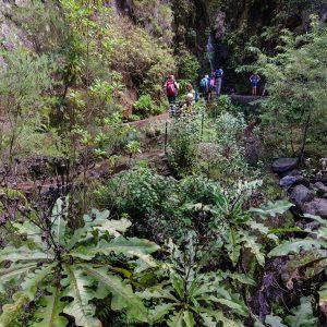 Madeira_hiking_tour-8